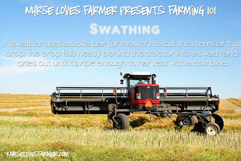 Lessons In Farming: Swathing