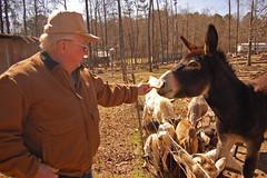 farm(0.0), donkey(1.0), mule(1.0), pack animal(1.0),