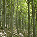 Foresta Barbottina