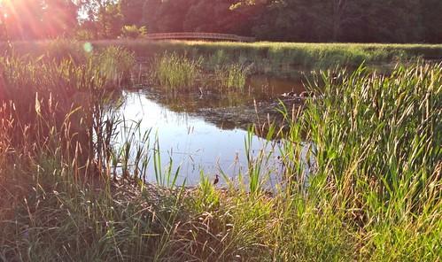 bridge sunset water birds marsh annapolisvalley kentville minersmarsh dschx100v sonydschx100v