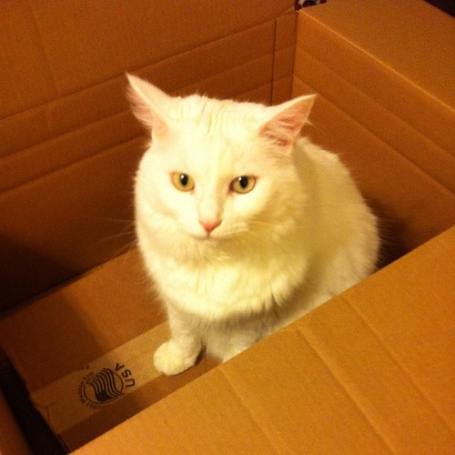 Box kitty.