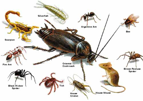 Six Tips for People Keen on Pest Control in Sunshine Coast