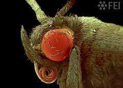 Scaley Moth Eye