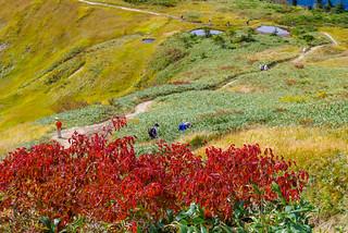 真っ赤な紅葉の木々