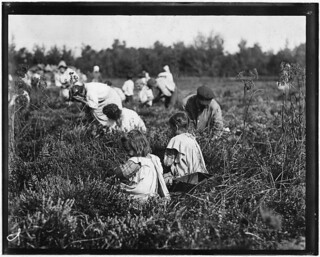 Rose Oquoto, 6 years old, and Flora Oquoto, 7 years old, of Philadelphia. Picking cranberries at Theodore Budd's Bog, September 1910