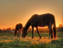[Free Images] Animals 1, Horses, Sunrise / Sunset ID:201207091000