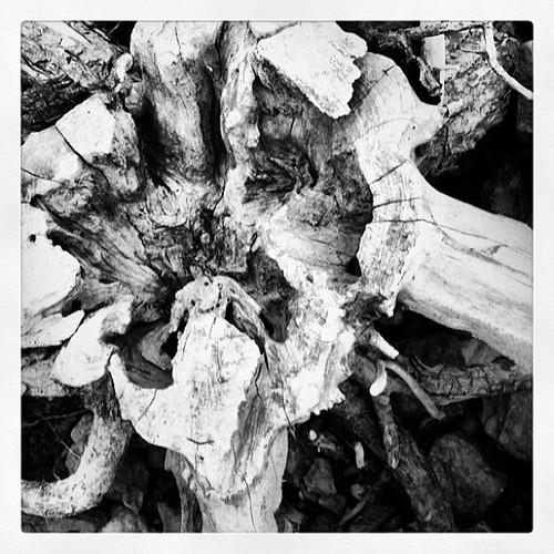 Stump at Point Clear by rraabfaber