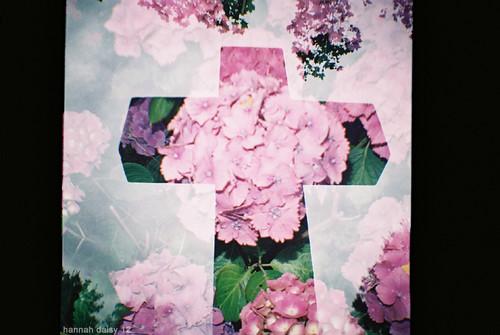 flowercross lilac
