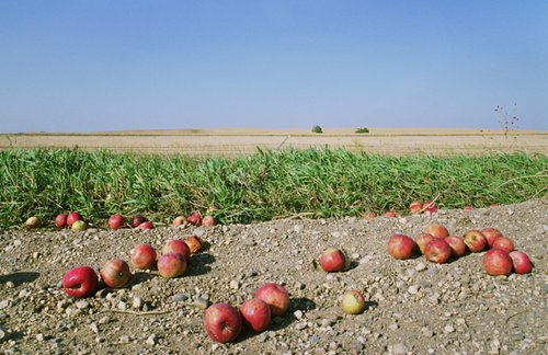 Rebecca Norris Webb, Fallen Apples, Near Spirit Lake, South Dakota, 2007