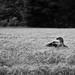 Corn Field by JonMorgan.