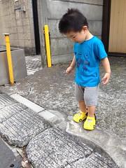 朝散歩とらちゃん (2012/7/18)