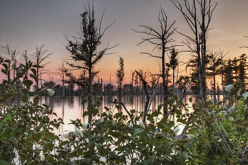 summer sky lake tree art nature water horizontal landscape dusk missouri 2012 lbnature