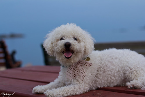 puppy-3.jpg
