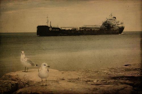 [フリー画像素材] 乗り物・交通, 船・船舶, 鴎・カモメ, セピア ID:201208020000