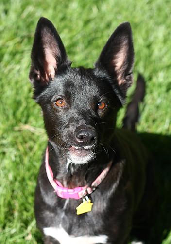 Kassie Foster Dog
