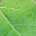 Vert 2 - Green 2