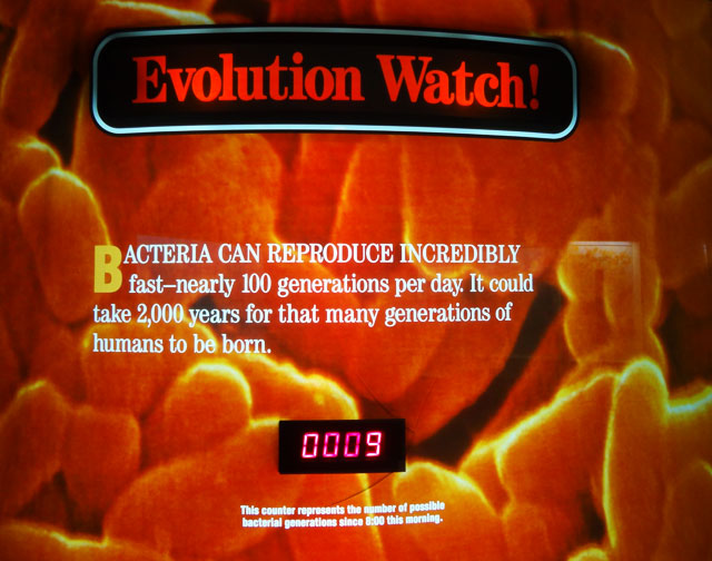bacteria-evolution-watch