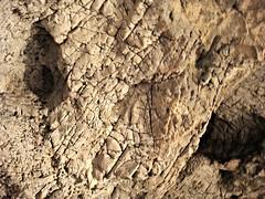 pics of erin cardillo nude