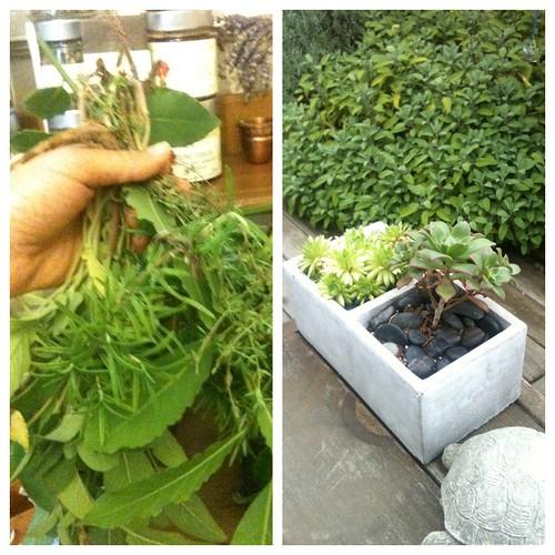 Karin's herbs