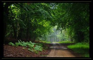 Through the forest