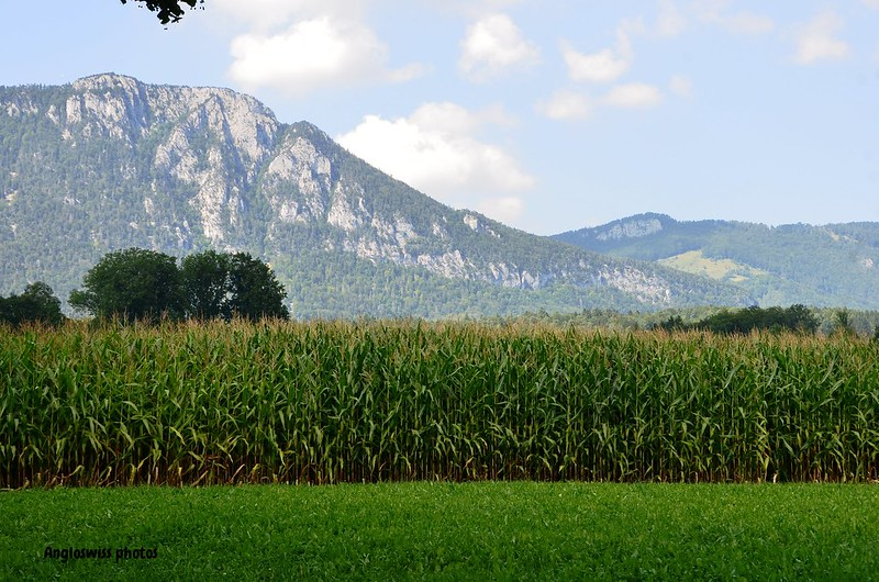 Corn field and Jura