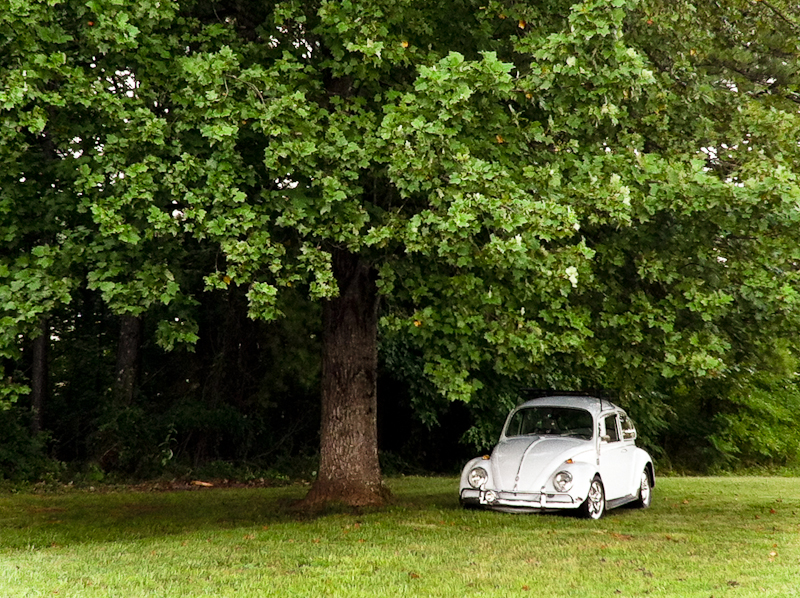 VW In the Shade