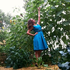 My sunflowers are very tall.
