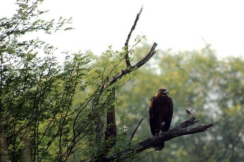 Auf einem Ausguck sitzt ein Adler