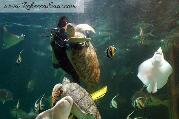 Singora Tram Tour - songkhla aquarium thailand-014