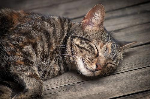 [フリー画像素材] 動物 1, 猫・ネコ, 寝顔・寝姿 ID:201208311000