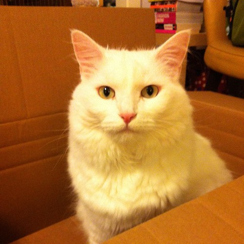 Lovely Nilla in a box.