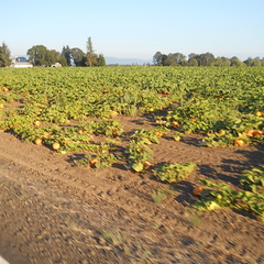 Field of dreams, field of squash