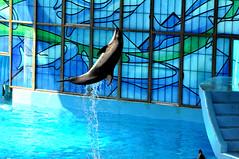Azul Theatrical Animal Show