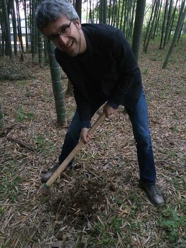 on récolte du bambou pour souper
