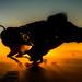 Lord Snout's Sunrise by digital-dreams