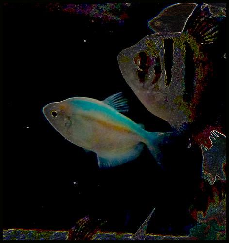 Neon Fish at Walmart Walmart Fish Aquarium