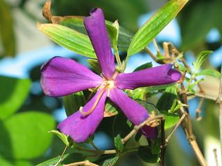 Purple flower at the aquarium