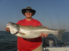 Bigfish by Striper Express