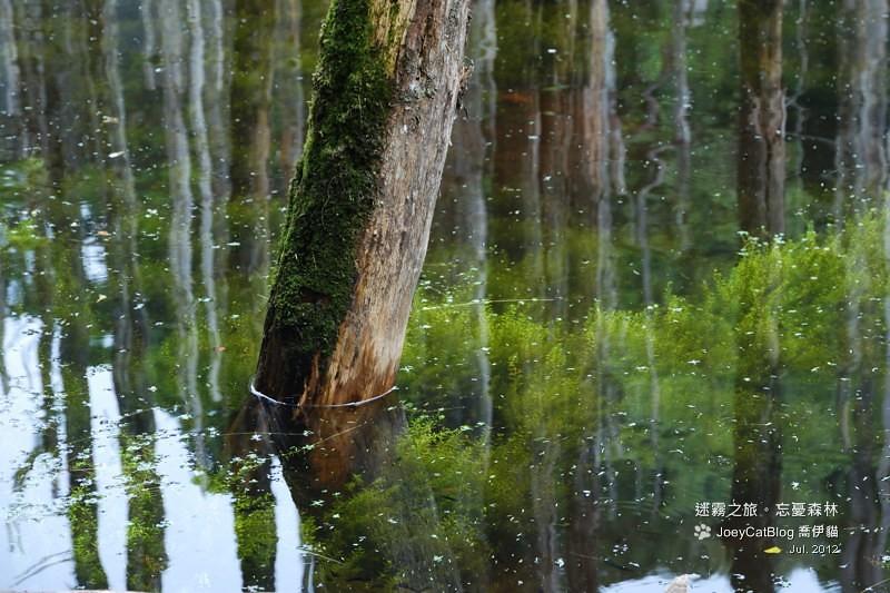 2012_0715_迷霧之旅。初訪忘憂森林DSC_5022