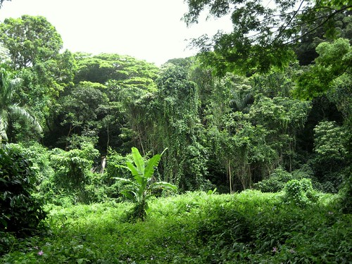 Selva Tropical: Bosques Biodiversos con Clima Tropical