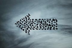 [フリー画像素材] グラフィック, フォトレタッチ, バックグラウンド, 文字・記号, 鳥類 ID:201209040000