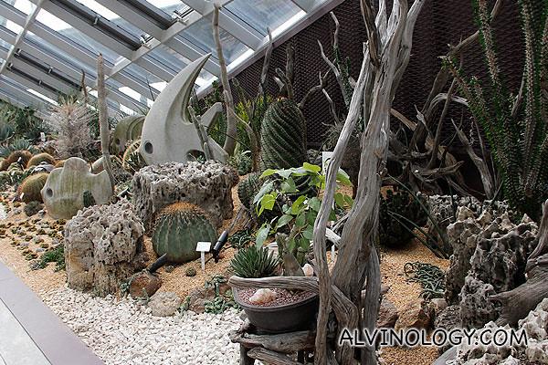Various arid plants