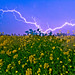 Nature n our  Punjab !!! by Rambonp love's all the crea