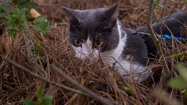 Kitten Prowl