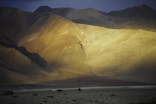 -Last sunbeam and horses on Tso Kar,alt 5600m. Ladakh.Jammu kashmir.India