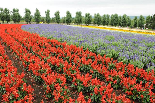 20120805 富良野富田農場