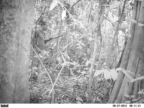 Nova, a poacher, stalks our study area