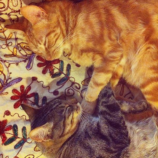 Tão fofos, os meus kitties.