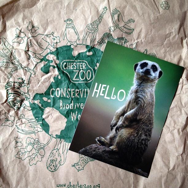 #meerkat #postcard #zoo #chester