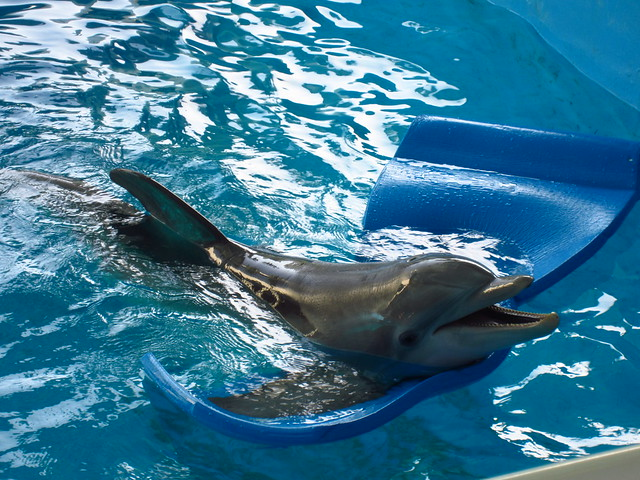 Image Result For Clearwater Marine Aquarium